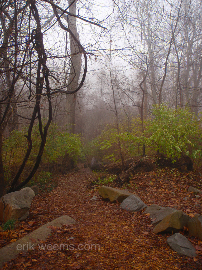 Fog in woods in Richmond Virginia