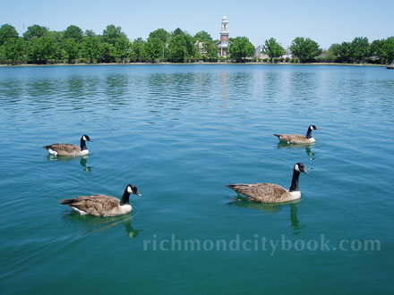 Ducks on Fountain Lake