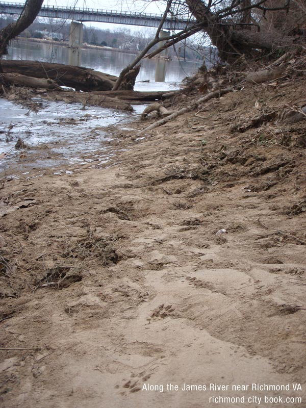 Animal Tracks along the James River near Richmond VA